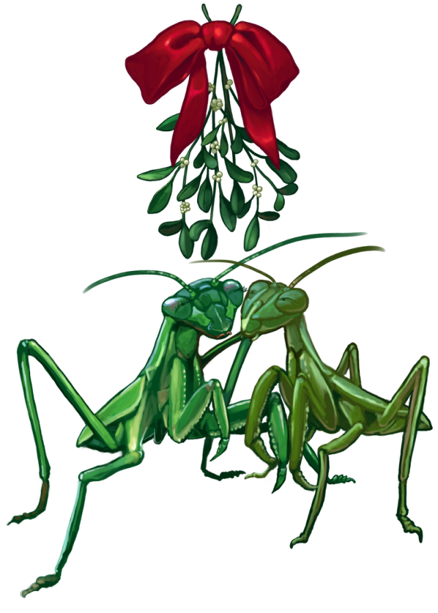 2013_christmascard_mantis1scaled