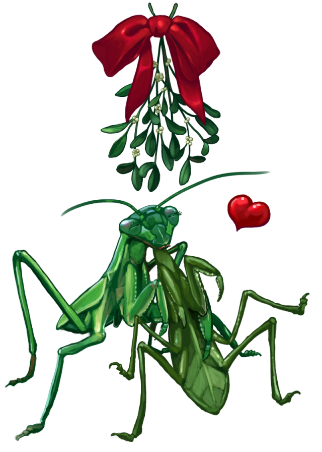 2013_christmascard_mantis2scaled